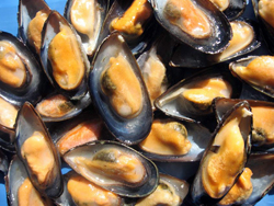 Canadian Blue Mussels