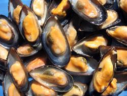 Atlantic Blue Mussels
